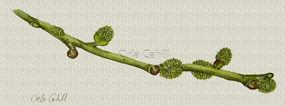 Twig Study in Watercolour by Orla Cahill