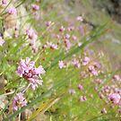 Field of flowers by heathernicole00