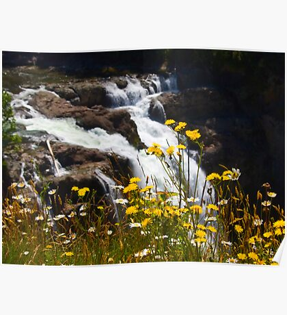 WIldflowers at Snoqualmie Falls Poster