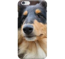 Rough Collie I iPhone Case/Skin