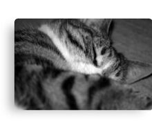 Lil' Series - At Peace Canvas Print