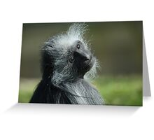 King Colubus Monkey Greeting Card