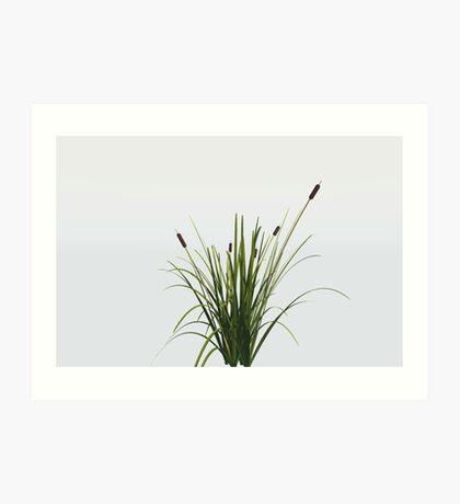 Reed Plant Art Print
