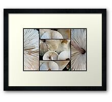 Lepiota Mushrooms Framed Print