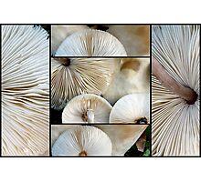 Lepiota Mushrooms Photographic Print