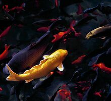 Gold Goldfish by Kevin Means