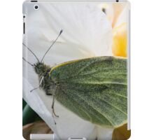 butterfly on a double daffodil iPad Case/Skin