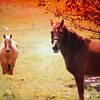 Horses in the Autumn Sun by Darlene Lankford Honeycutt