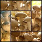 Brown Beech Mushrooms by TheWalkerTouch