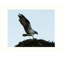 Building its Nest #2 Art Print