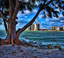Clearwater Tree by fullpruf