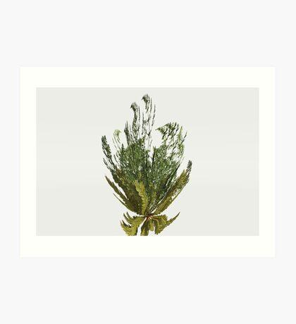 Foeniculum Plant Art Print