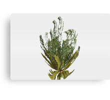 Foeniculum Plant Canvas Print