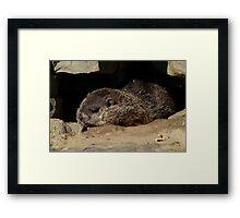 On The Rocks. Framed Print