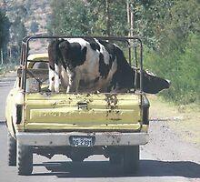 Peruvian cow by katylynn44