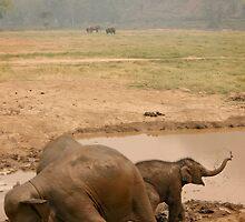 Happy as an Elephant in mud by Kyra  Webb