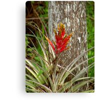 Quill Leaf Canvas Print