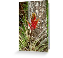 Quill Leaf Greeting Card