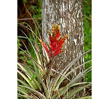 Quill Leaf Photographic Print