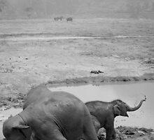 Happy as an Elephant in mud in B&W by Kyra  Webb