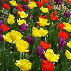 Spring Brillance  by clizzio