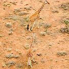 Giraffe couple by David Clarke
