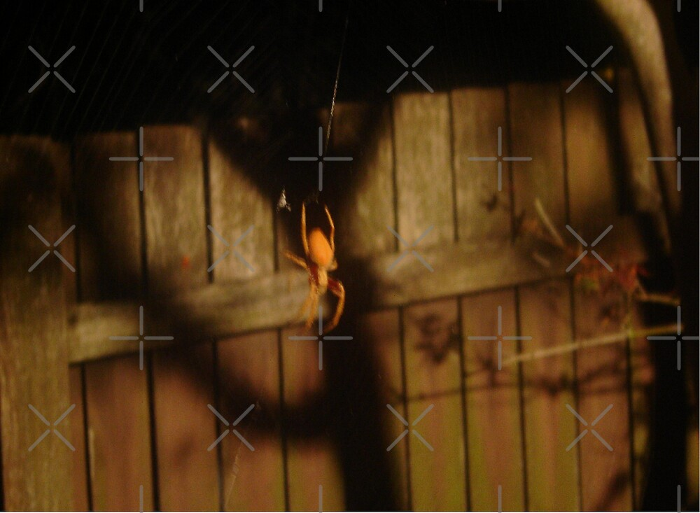 Spidery Web & Fence by KazM