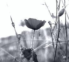 Serene by Jodi Turner