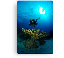 Diver in Egypt Canvas Print