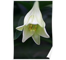 Easter Lilly Pure Poster