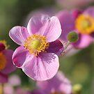 Biltmore Beauties by Darlene Lankford Honeycutt