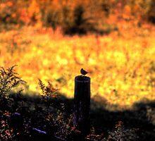 Songbird on a Fencepost by Wayne King