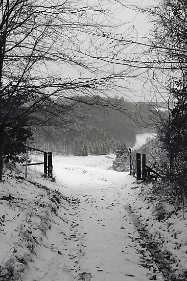 Narnia b&w by Charlotte Jarvis
