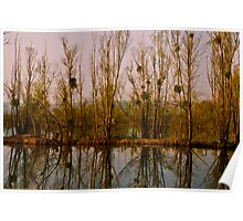 Pond Trees and Mistletoe Poster