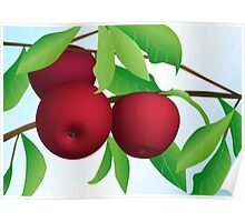 Apples on a Branch Poster