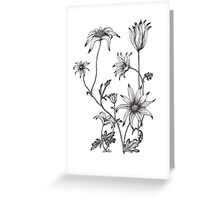 Flannel Flower - Actinotus helianthe Greeting Card