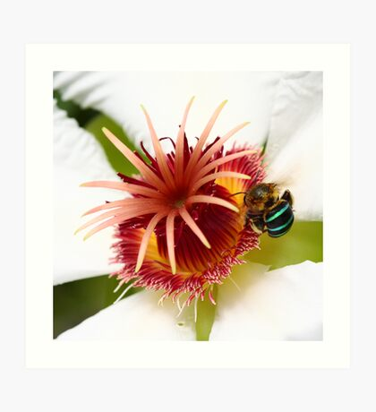 Bumble Bee in Blue Art Print