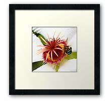 Bumble Bee in Blue Framed Print