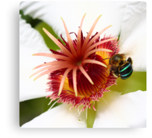 Bumble Bee in Blue Canvas Print