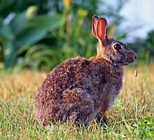 Easter Bunny by photobear
