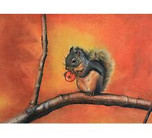 Little Red Squirrel  Photographic Print