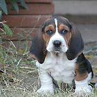 Shango puppy by nosajnybor