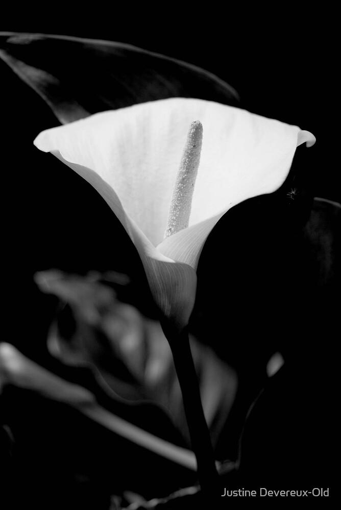 Solitude by Justine Devereux-Old