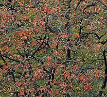 Autumn 2 by manifold53