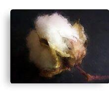 Raw Cotton Canvas Print