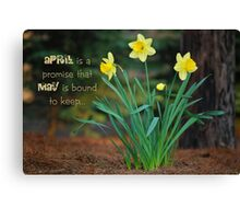 April Daffodils Canvas Print