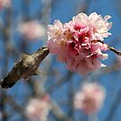 Hummingbird on Lunch by saseoche