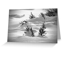Sage Brush Winter Greeting Card