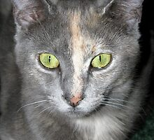 green eyed kitty by tomcat2170