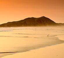 Stalking the beach by Andrew Howson